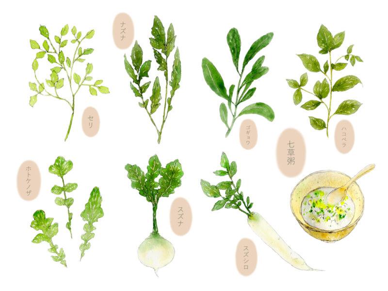 日本の薬膳 春の七草